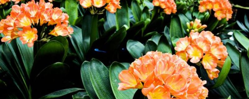 家庭适合养殖的花卉植物