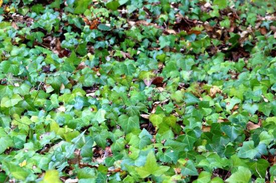 什么植物可以除甲醛净化空气