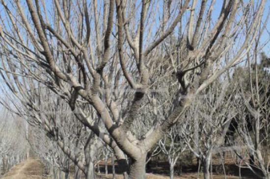 保护树木的方法