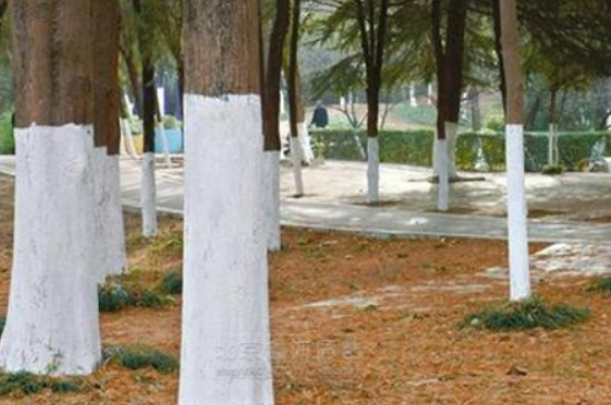 树木涂白的作用和原理