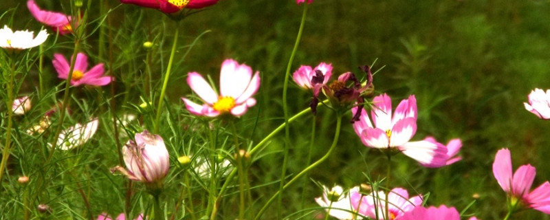 十二月份适合播种什么花种子