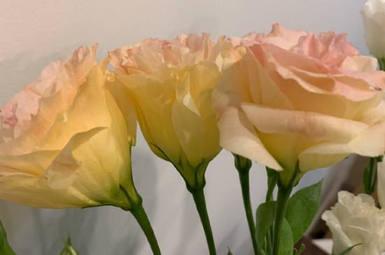 3朵洋桔梗花语是什么